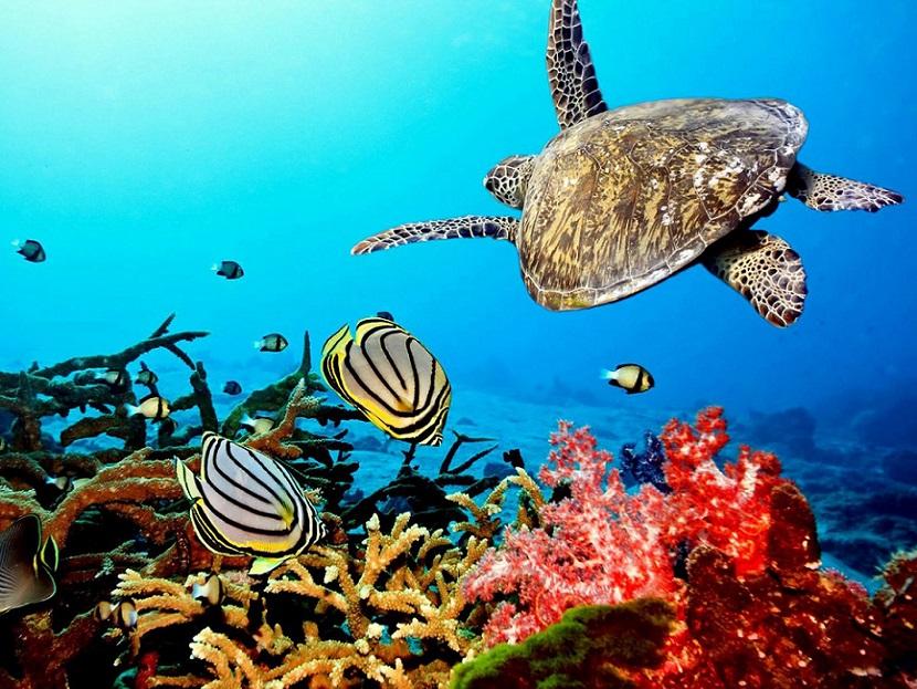 Bacterias marinas pueden acelerar cambio climático.