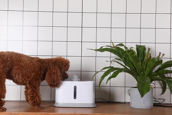 Urban Pet, una nueva opción para mimar tus mascotas