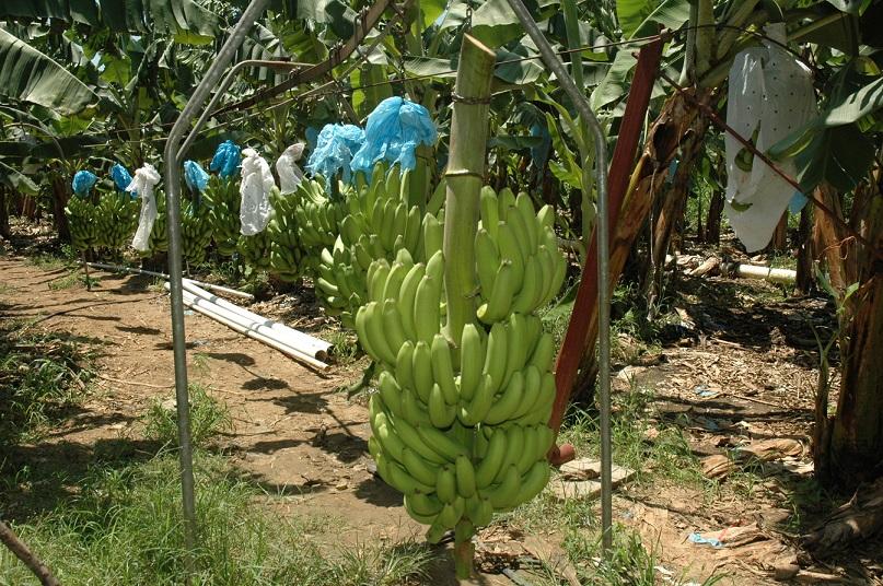 Ministerio de Agricultura activa CONAO.