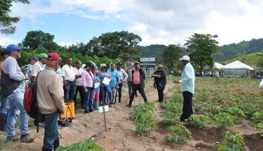Investigadores en raíces y tubérculos del IDIAF, el CONIAF y el Ministerio de Agricultura, junto a productores de yuca, realizaron una jornada de transferencia de tecnologías para la producción en El Seibo.(Foto: externa)