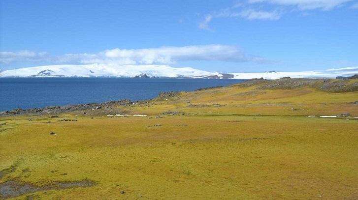 Antártida el continente helado se está poniendo verde. (Foto: Matt Amesbury)
