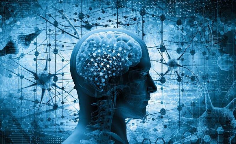Científicos identifican proteínas conservan identidad de neuronas.