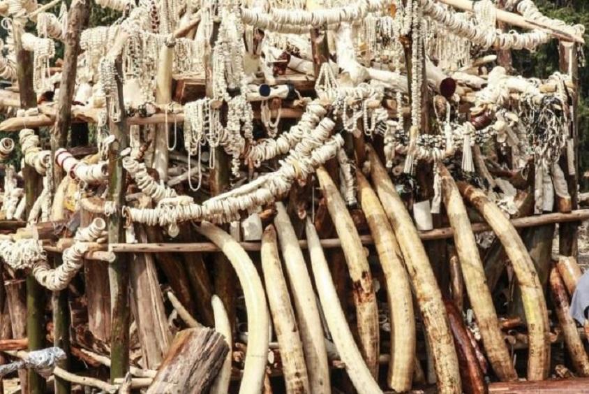 Seis elefantes muertos por cazadores furtivos.