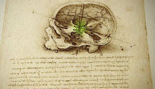 Da Vinci fue el primer artista en realizar una autopsia humana completa, así que su conocimiento del funcionamiento del cuerpo era muy superior al de cualquiera de sus contemporáneos.