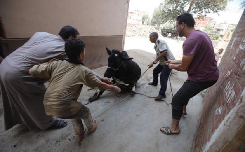 Oriente Medio celebra la Fiesta del Sacrificio con mascarilla y sin rezos.
