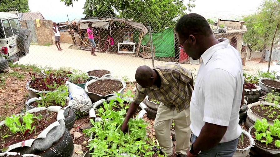 Huerto de traspatio (agricultura) en Haití. (Fuente: externa)