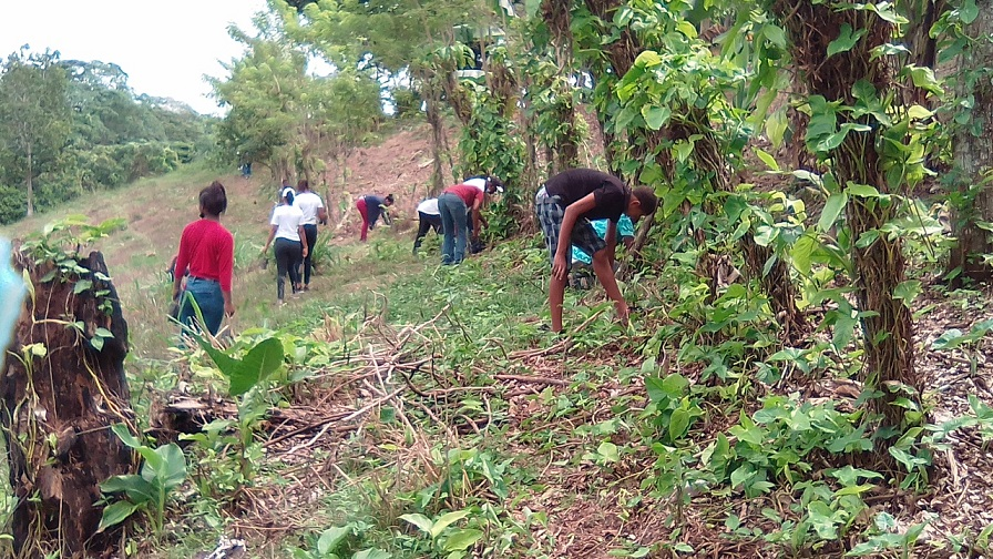 IDDI inicia jornada de reforestación en San Cristóbal.